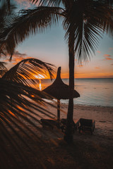 Silhouette of palm tree, sun loungers and parasol on beach at sunset