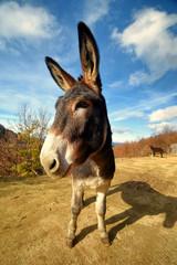 Foto op Plexiglas Ezel donkey closeup