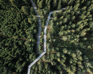Aerial of a treetop walkway in a pine forest crossing with a road