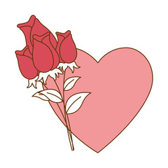 beautiful roses with heart decorative icon vector illustration design