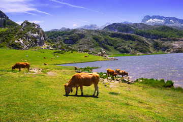 mountains landscape with lake and pasture