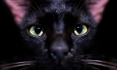 Black cats eye staring over black