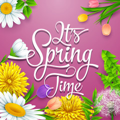 Spring background with colorful various flowers. It's spring time