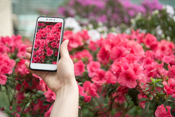 A girl takes on phone blossoming azaleas