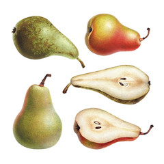 Watercolor illustrations of apples and pears.