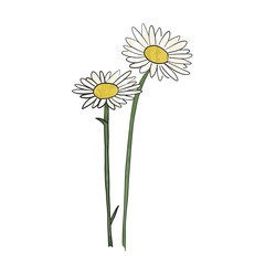 Hand drawn daisy flower, vector
