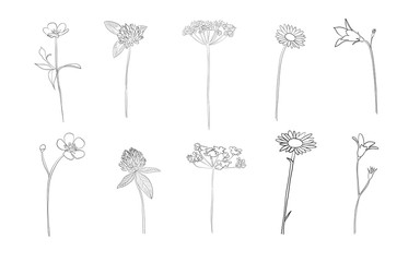 Hand drawn wild flowers in summer, vector