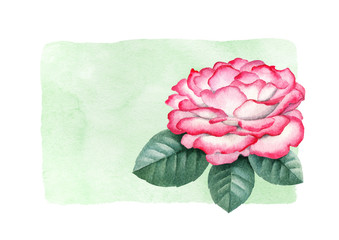 Background with a watercolor rose flower. Perfect for greeting cards or invitations
