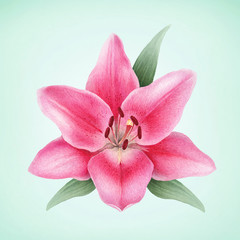 Watercolor illustration of lily flowers. Perfect for greeting card or invitation