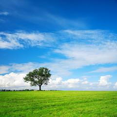 Fototapete - Grünes Feld, solitärer Baum, blauer Himmel mit Wolken