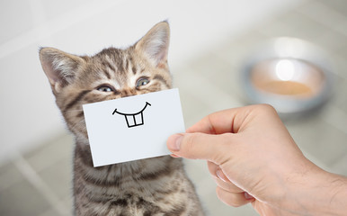 Papier Peint - funny cat with smile on cardboard sitting near food
