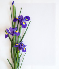 Flowers of irises lie on white paper