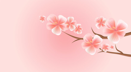 Branches of Sakura with Pink flowers isolated on Pink background. Sakura flowers. Cherry blossom. Vector