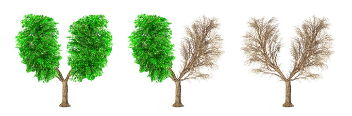 Eco concept. Set of trees have a shape of human lungs isolated on a white background. Change seasons.
