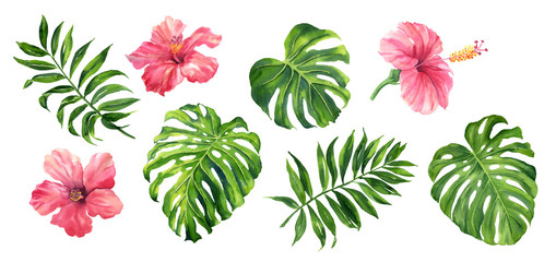 Realistic tropical botanical foliage plants. Set of tropical leaves and flowers: green palm neanta, monstera, hibiscus. Hand painted watercolor illustration isolated on white. Wall mural