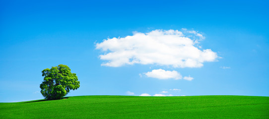 Wall Mural - Grünes Feld, solitäre Linde, blauer Himmel, einzelne Wolke