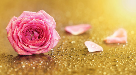Invitation card with pink rose flower on gold background