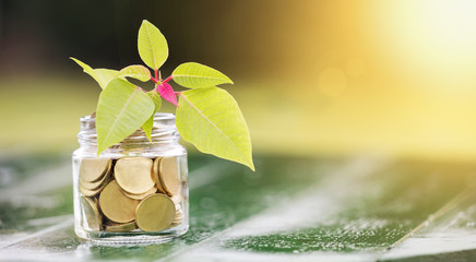 Money savings concept - web banner of gold coins in a jar glass with blank, copy space