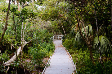 boardwalk into the woods