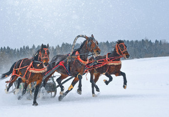 Three bay trotters on the run on a snowy racetrack.
