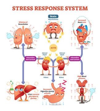 Stress response system vector illustration diagram, nerve impulses scheme.