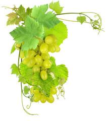 Wall Mural - grappes de raisins blanc et vigne