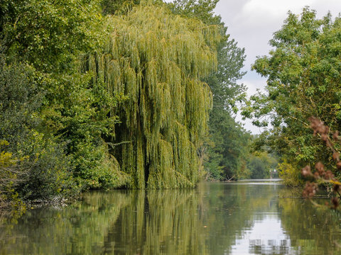Old willow and other trees near water in Marais Poitevin Natural Regional Park