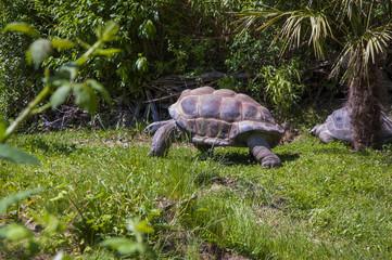 Giant tortoise in the zoo, Vienna, Austria