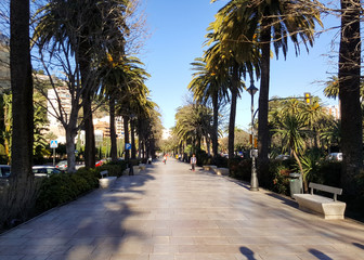 Palm trees with a walkway, beautiful sumer day in Malaga, Spain