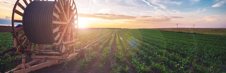 Fototapeta Bewässerungssystem in der Landwirtschaft obraz