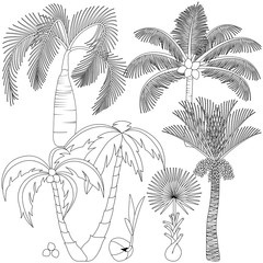 Set of palm trees isolated on white background. Beautiful vector palm trees illustration.