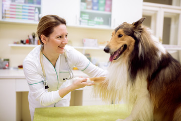 Smiling young veterinarian and dog at pet ambulance