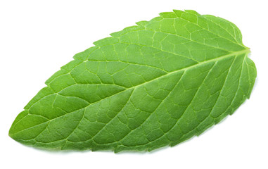 Fresh raw green mint leaf isolated on white background
