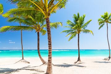 Coconut Palm trees on white sandy beach