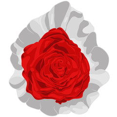 Vector Illustration of Red Rose in Plastic Package