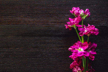 Pink Freesia on Dark Table