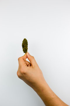 Man holding weed nug isolated on white background