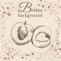 Hand drawn sketch with apricot on sepia vintage background. Vector illustration