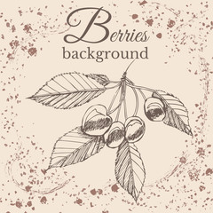 Hand drawn sketch with cherry on sepia vintage background. Vector illustration