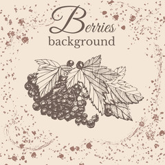 Hand drawn sketch with currant berry on sepia vintage background. Vector illustration