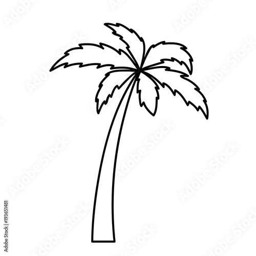 Ausmalbild Palme Stock Image And Royalty Free Vector Files On