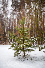Photo of snowy landscape and fir tree