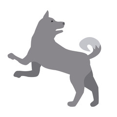 Wolf animal silhouette icon vector illustration graphic design