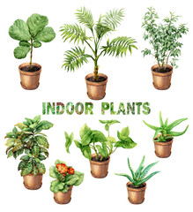Watercolor Indoor Pot Plants