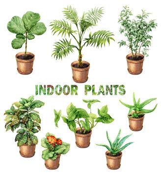 Watercolor Indoor Pot Plants