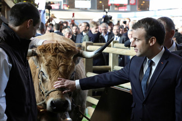French President Emmanuel Macron caresses a cow as he visits the 55th International Agriculture Fair (Salon de l'Agriculture) in Paris