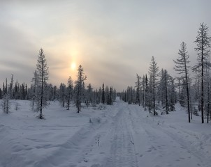 Winter road in arctic winter forest