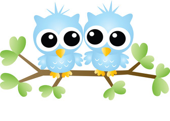 two sweet blue owls sitting on a branch