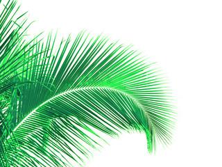 palme verte, fond blanc