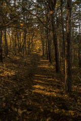 low sunlight casting rays and shadows between trees in forrest